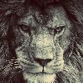 King Khan 5193844547